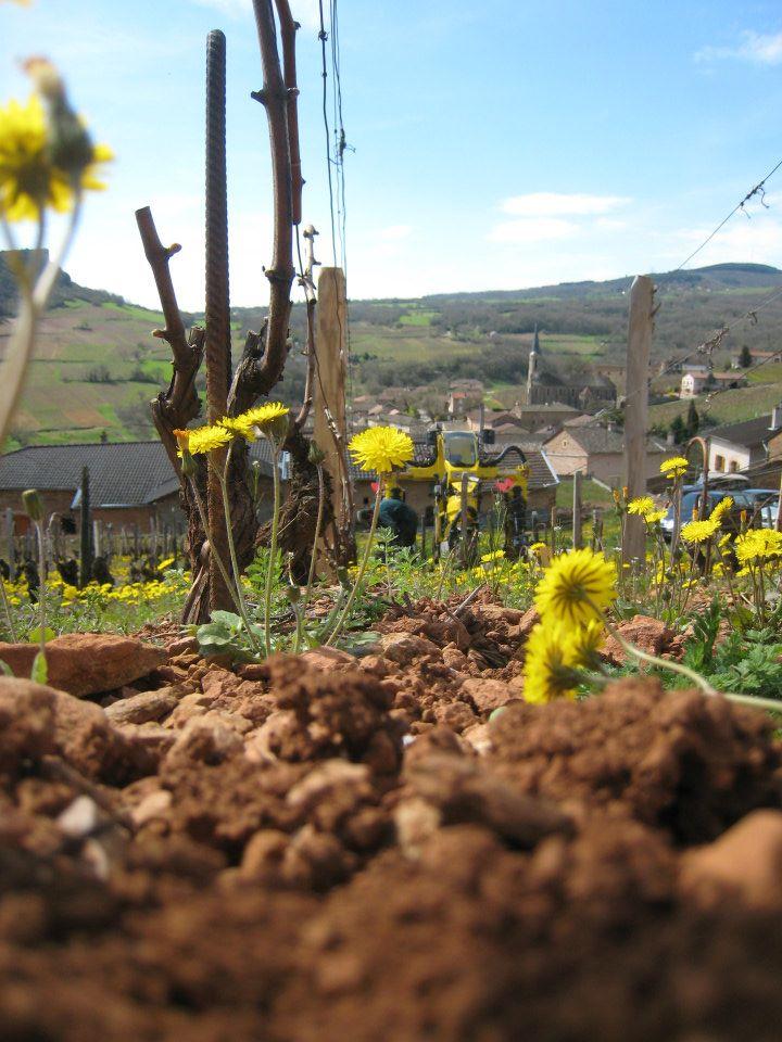 Tracteur labourant les rangs de vignes